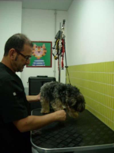 Foto 9 de Veterinarios en  | Veterinario El Puertito