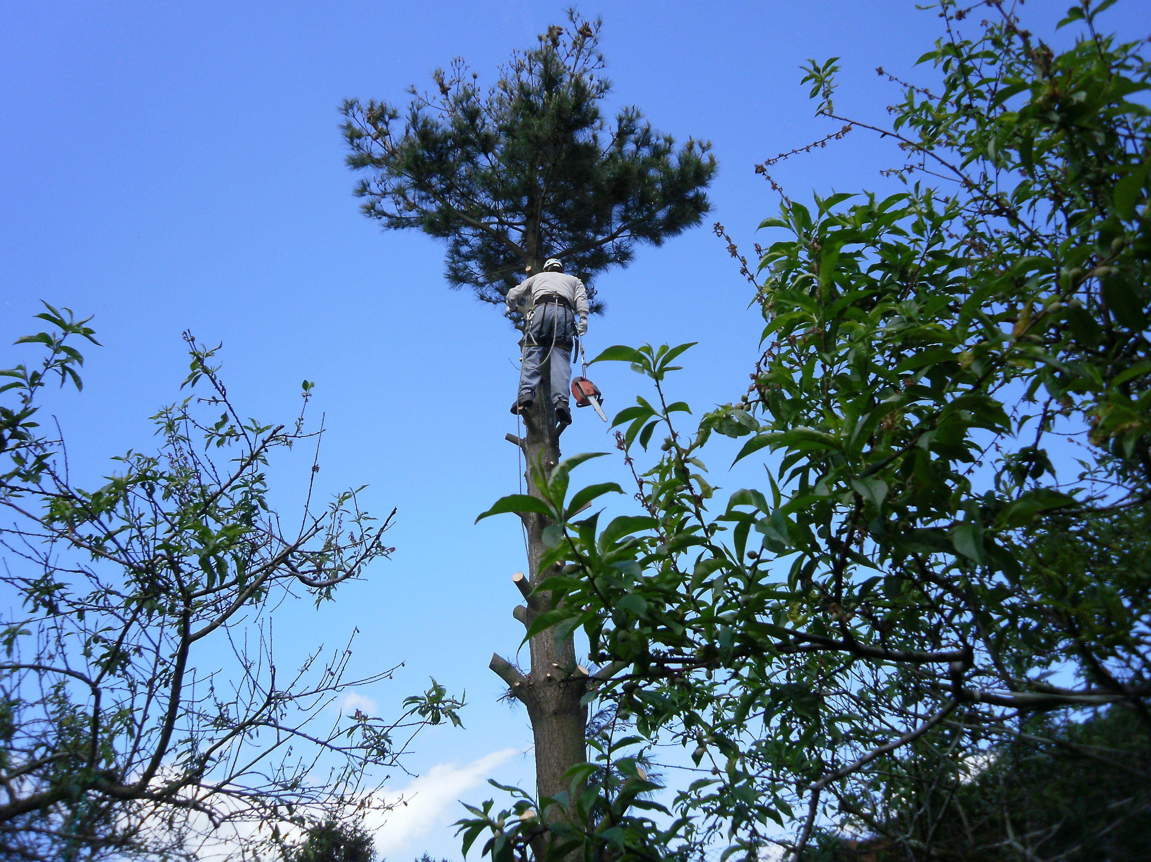 Podas de árboles en altura : Servicios que ofrecemos   de Casverde