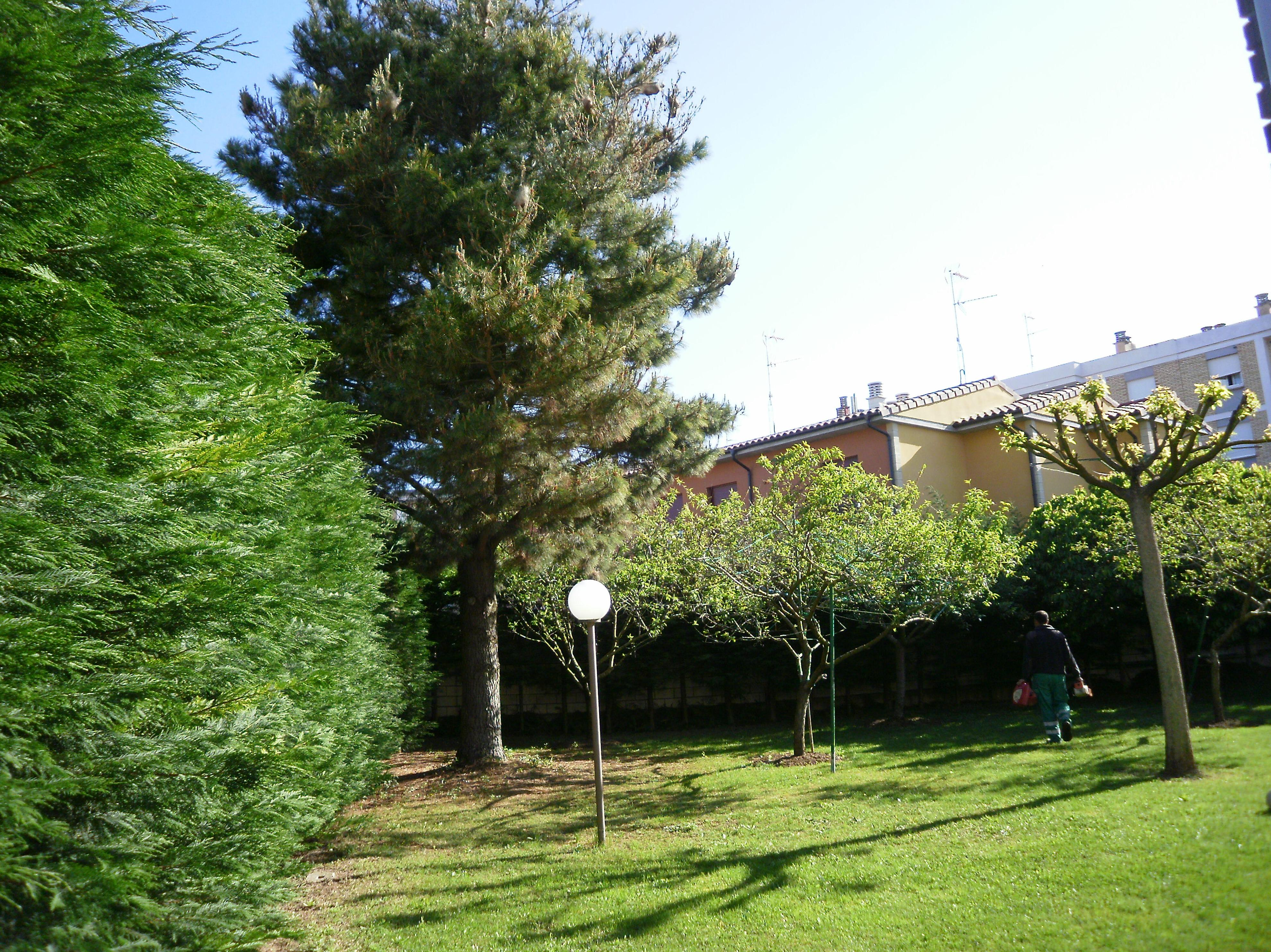 Casverde - Podas