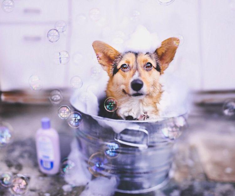 Baño de perros en Carabanchel