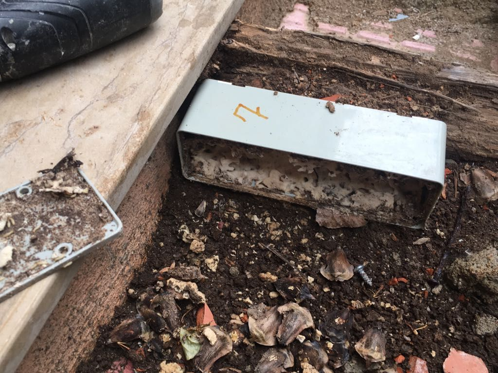 Eliminación de termitas en Castellón