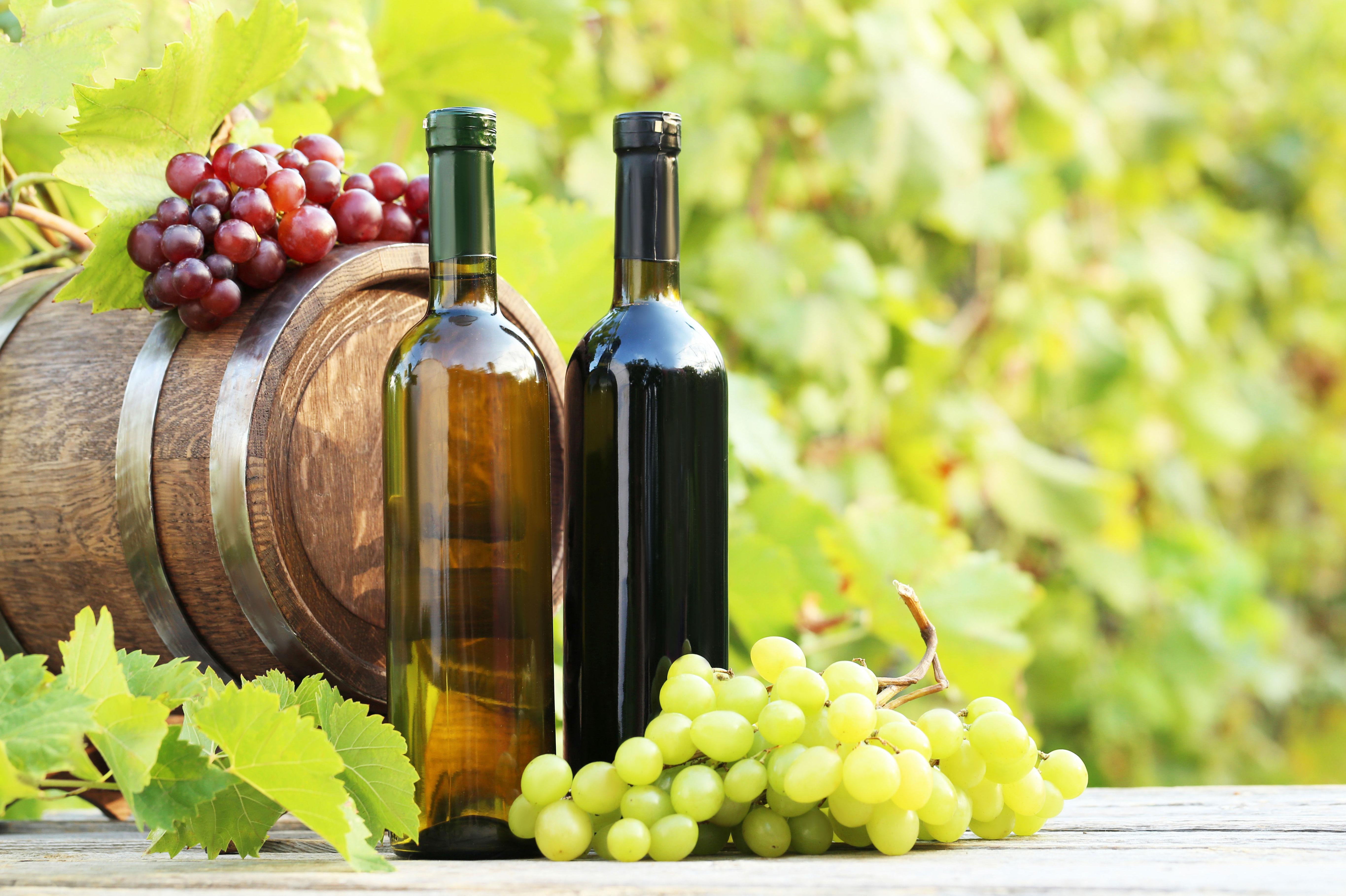 Vinos de mesa: Productos de Rexgosa®