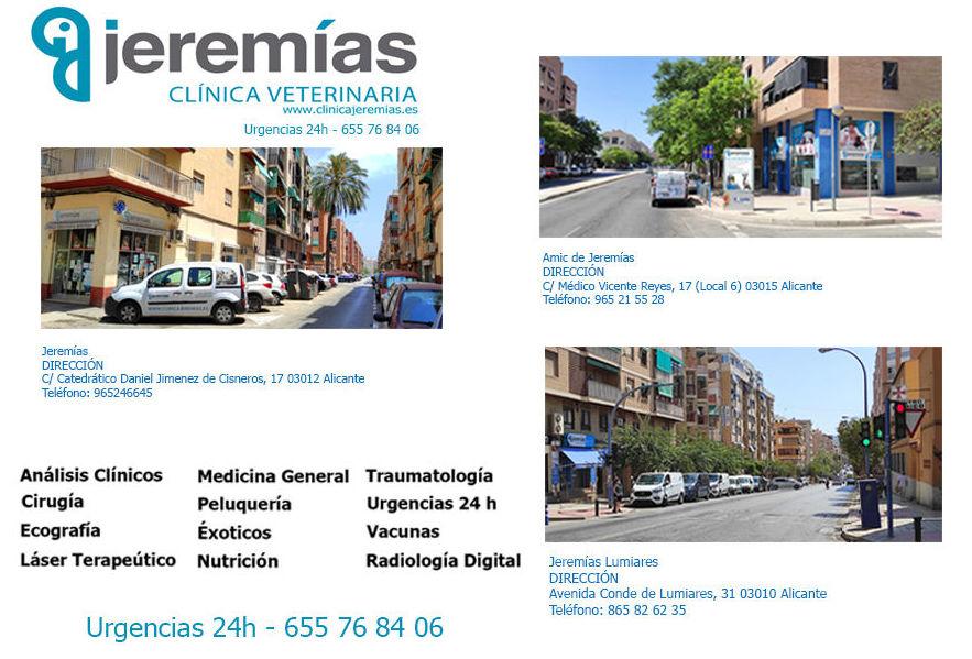 Foto 4 de Clínica veterinaria en  | Clínica Jeremías