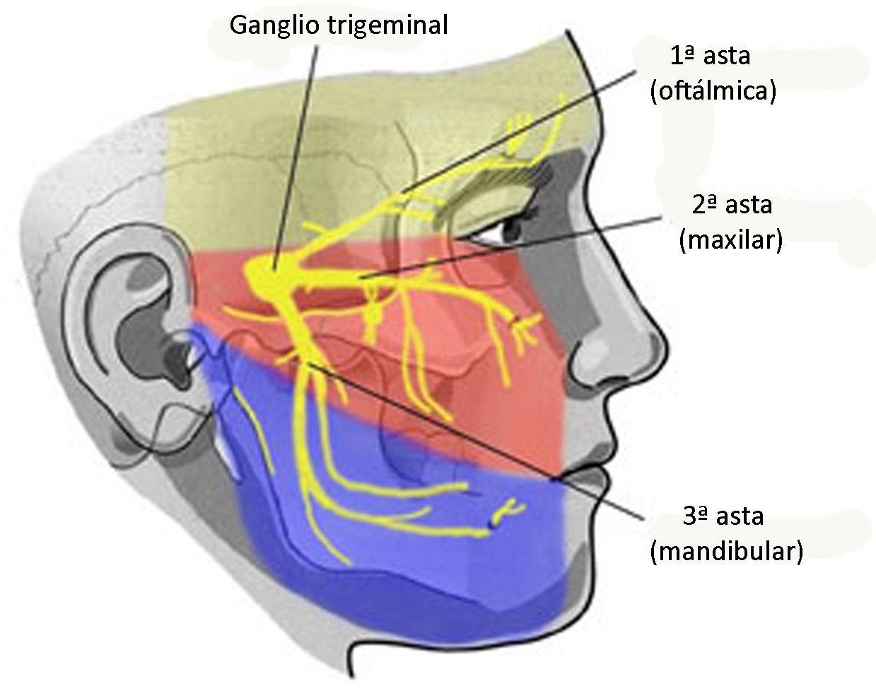 Neuralgias de trigemino: Servicios de Jull Acupuntura