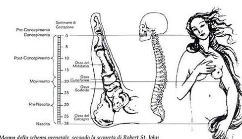 Tecnica Metamorfica y embarazo