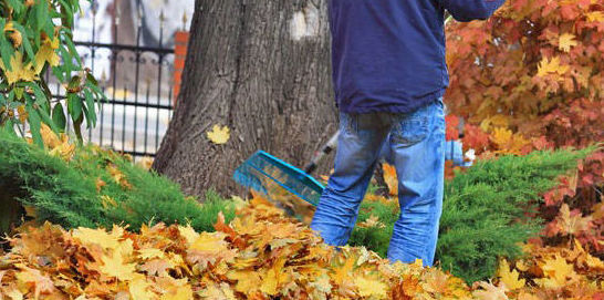 Trabajos de jardinería para particulares