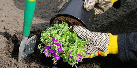 Profesionales de jardinería