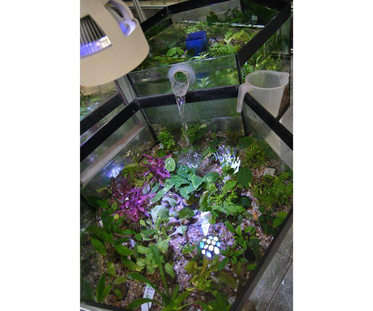 Acuarios y complementos de acuariofilia en Cartagena