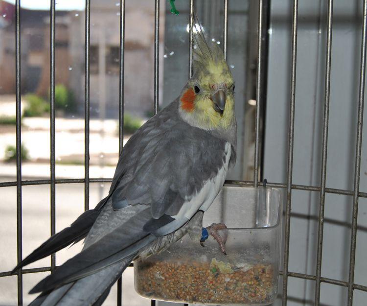 Venta de pájaros en Cartagena