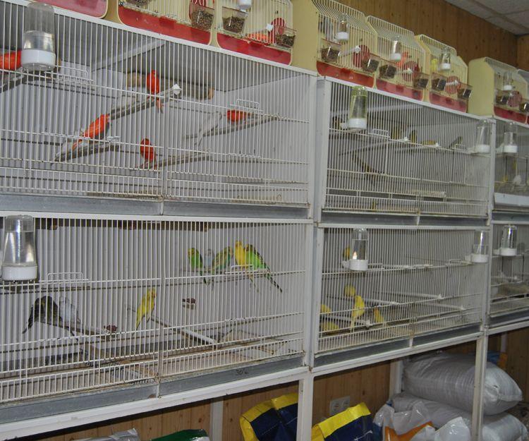 Piensos y complementos para canarios en Cartagena
