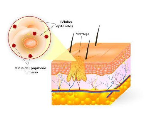 Venereología Barcelona