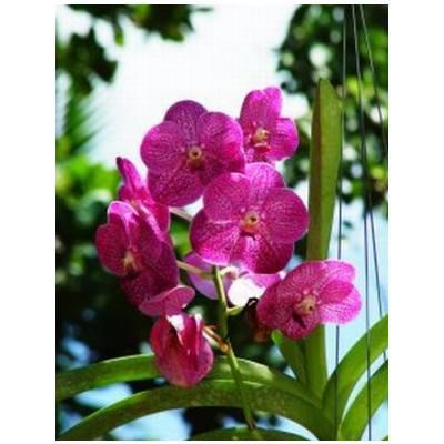 Decoración: Servicios de Alternatives Florals