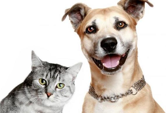Veterinarios en Hortaleza Canillas de Madrid perros y gatos