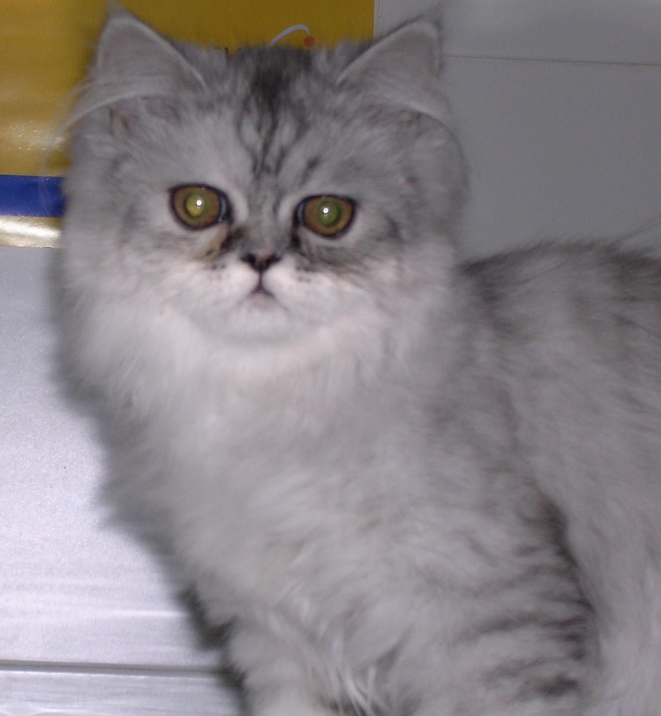 Medicina veterinaria felina en Madrid, Hortaleza - Canillas