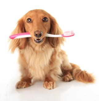 Una buena higiene oral es fundamental para la salud de tu mascota.