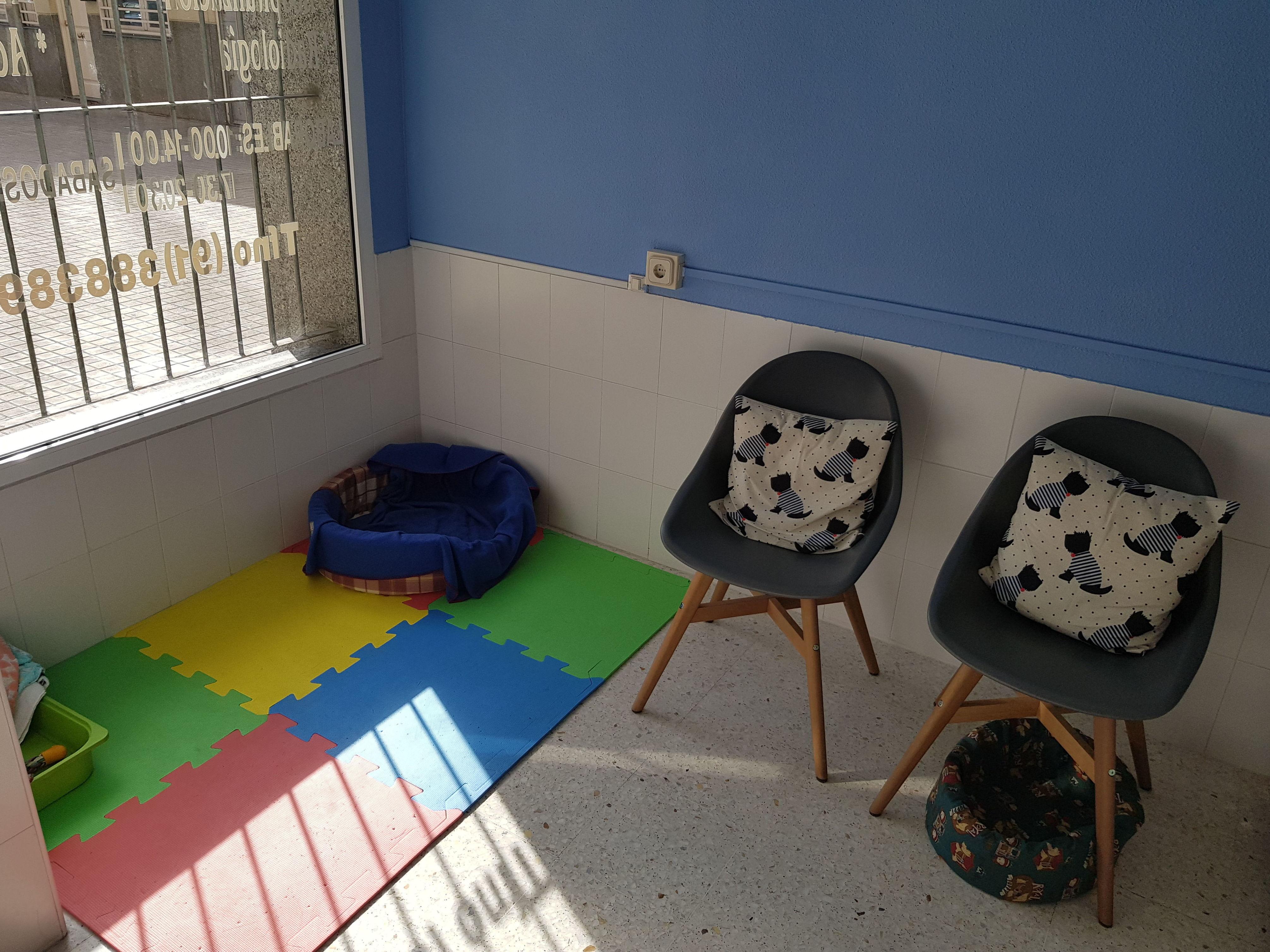 Clínica veterinaria, sala de espera, zona de juegos para perros