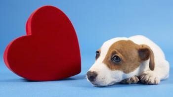 Protege el corazón de tu perro