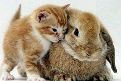 Medicina veterinaria mascotas