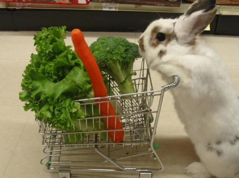 Cuidado del conejo en Veterinario Argos Madrid