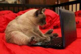 Mascotas en la red