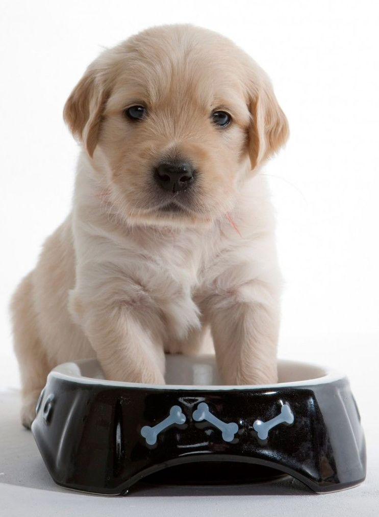 Asesoramiento en alimentación de mascotas en veterinario Canillas Hortaleza, Madrid