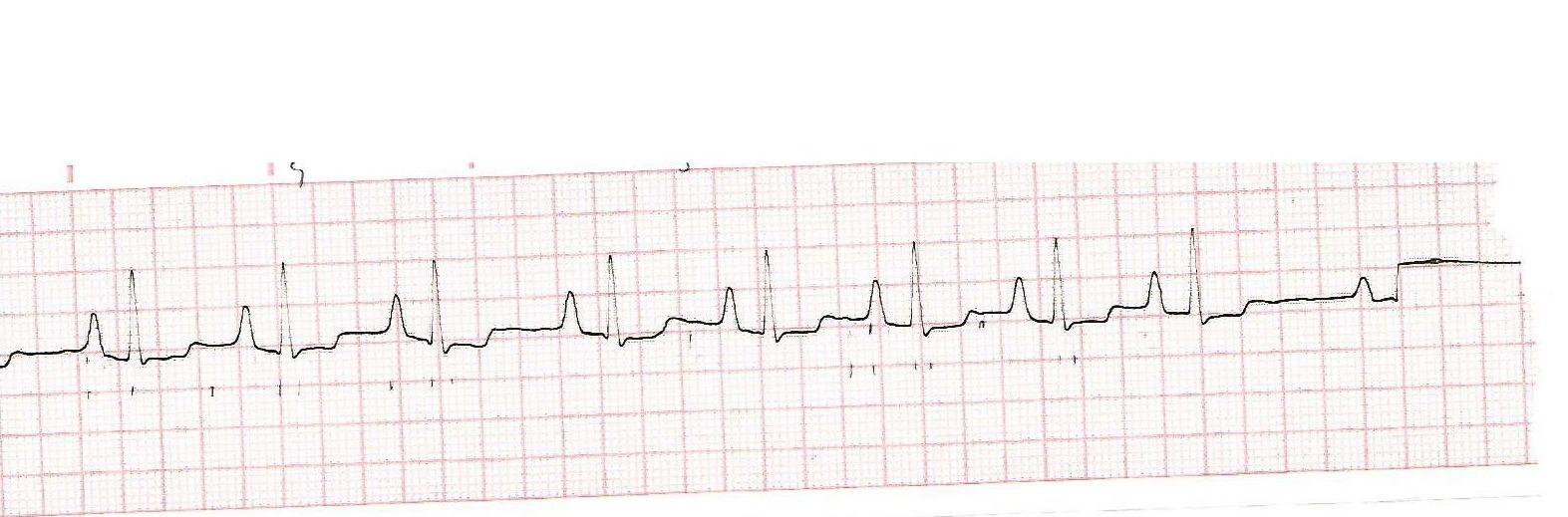 Servicio de Cardiología: CATÁLOGO de Argos Centro Veterinario