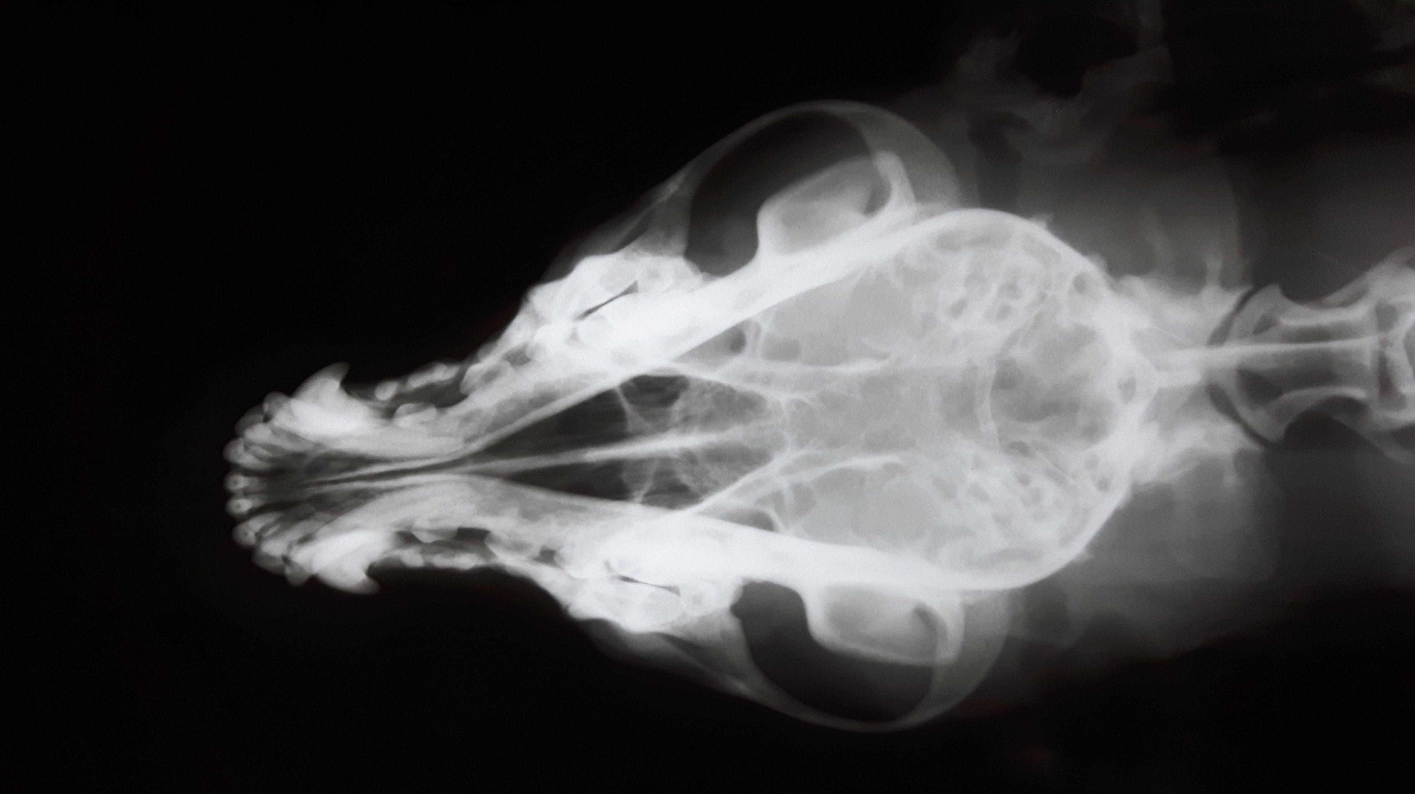 Radiología veterinaria clínica Argos Hortaleza - Canillas