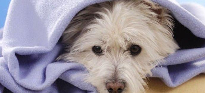 Cuidados intensivos veterinarios en Madrid