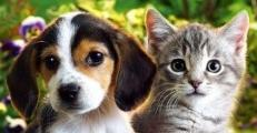 Bonos cachorro: CATÁLOGO de Argos Centro Veterinario