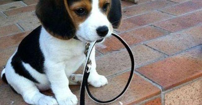 Información mascotas veterinario Argos Madrid zona Hortaleza Canillas