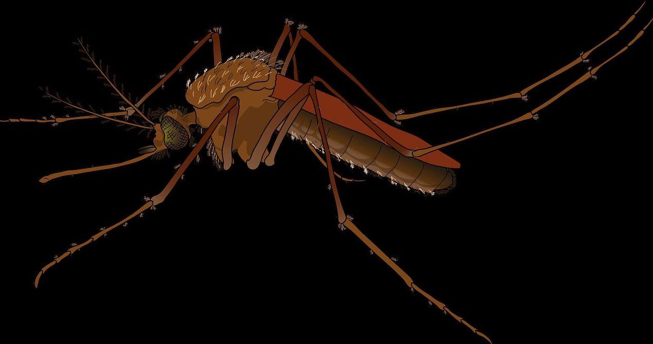 Mosquito leishmaniosis. Vacunacion