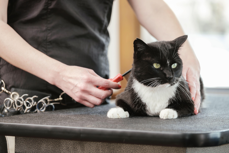 Veterinario de gatos: Servicios veterinarios de C. V. Gabriel Usera