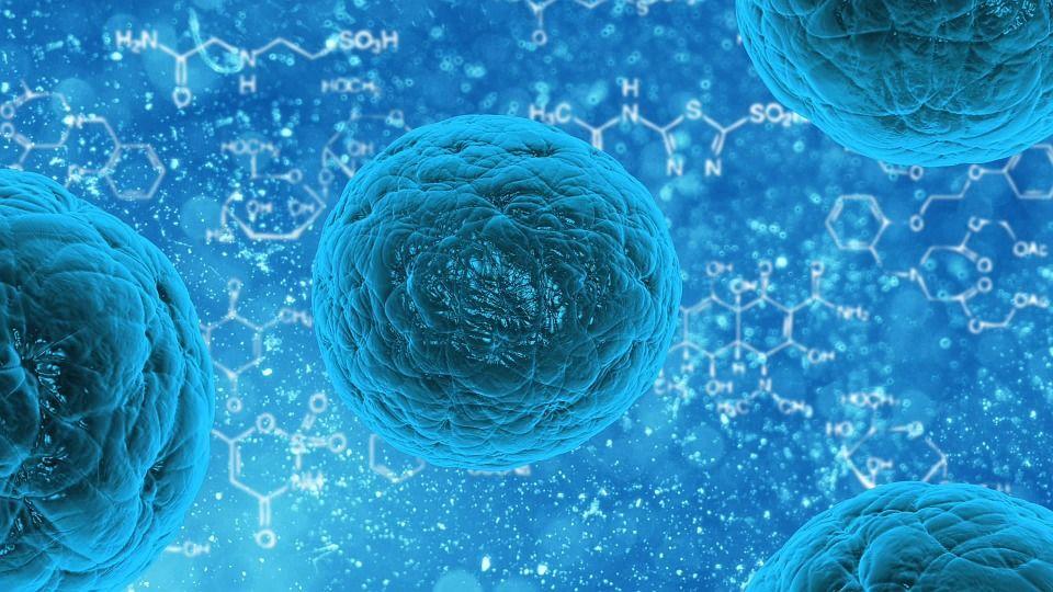Desinfección: Control de plagas de Sanimur Sanidad Murciana