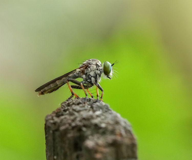Eliminación de plagas de moscas y mosquitos en Murcia