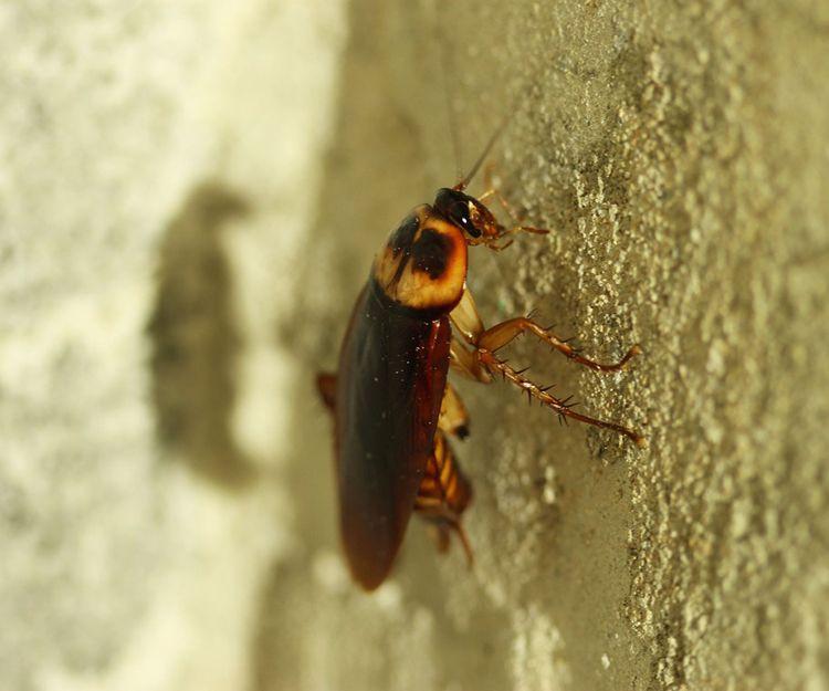 Eliminación de plagas de insectos en Murcia