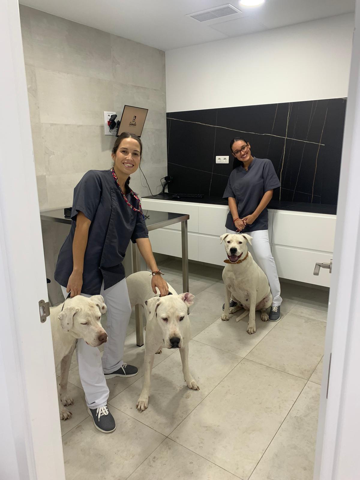 Laboratorios veterinarios Tenerife