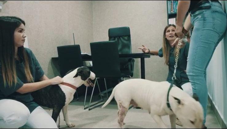 Traumatología veterinaria Tenerife