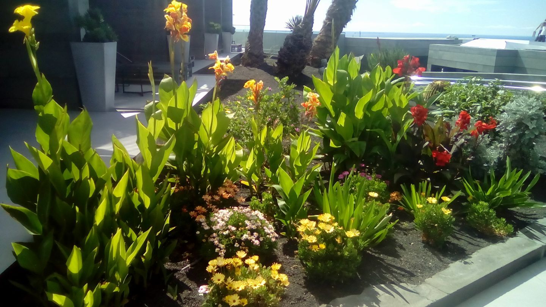 Plantas de clima tropical en Las Palmas