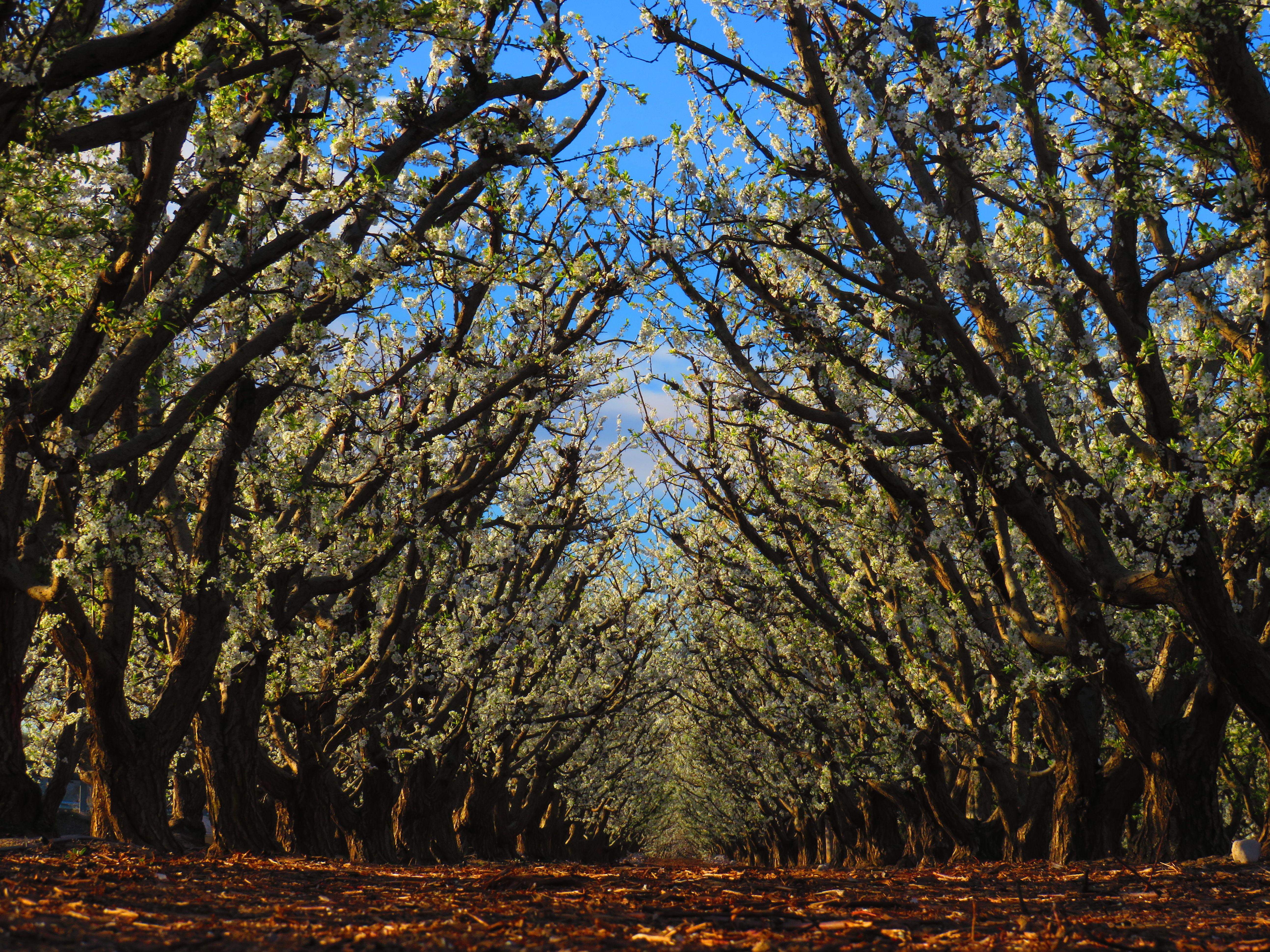Foto 9 de Producción de frutas en Abarán | Uniland