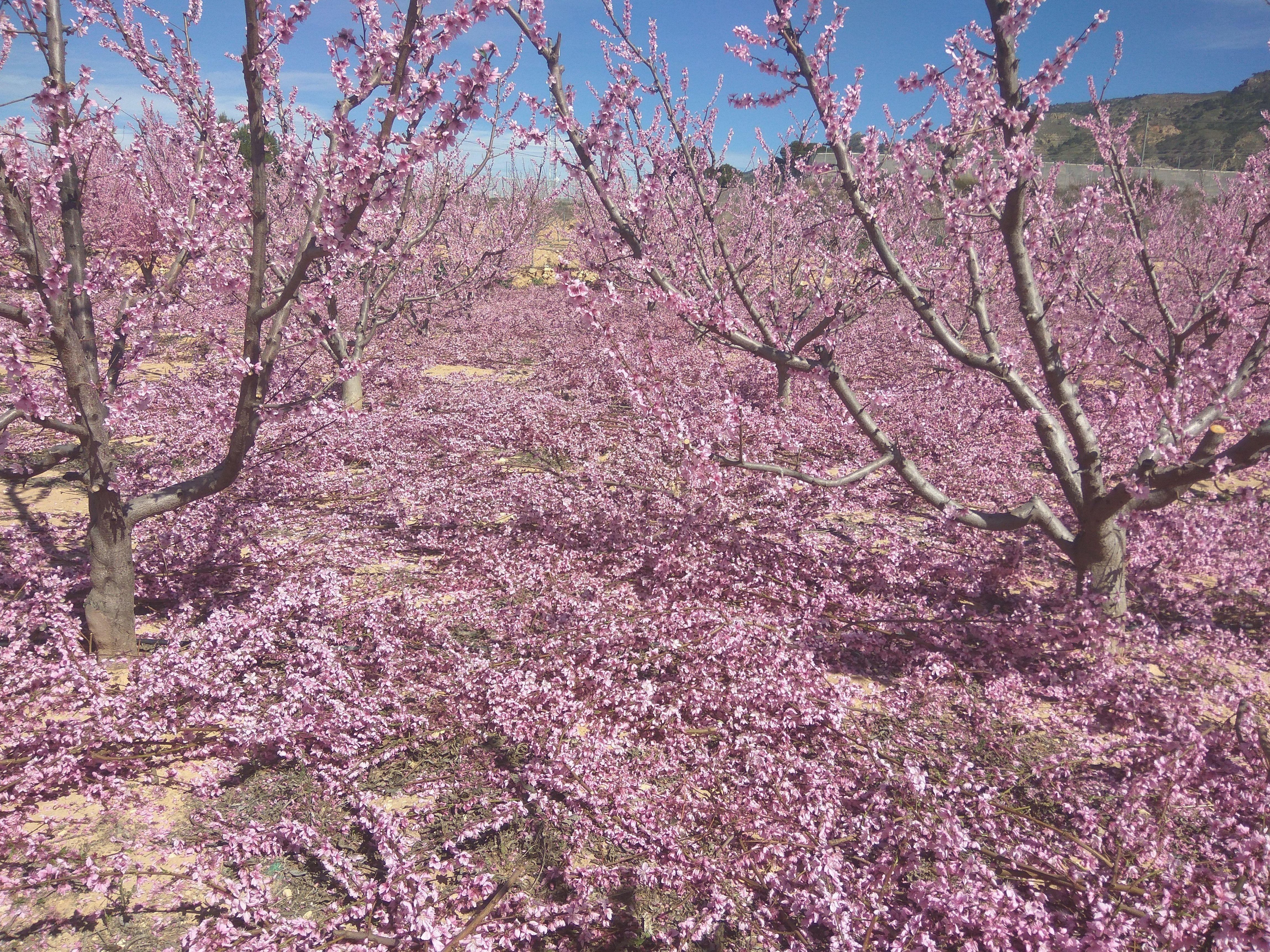 Foto 5 de Producción de frutas en Abarán | Uniland