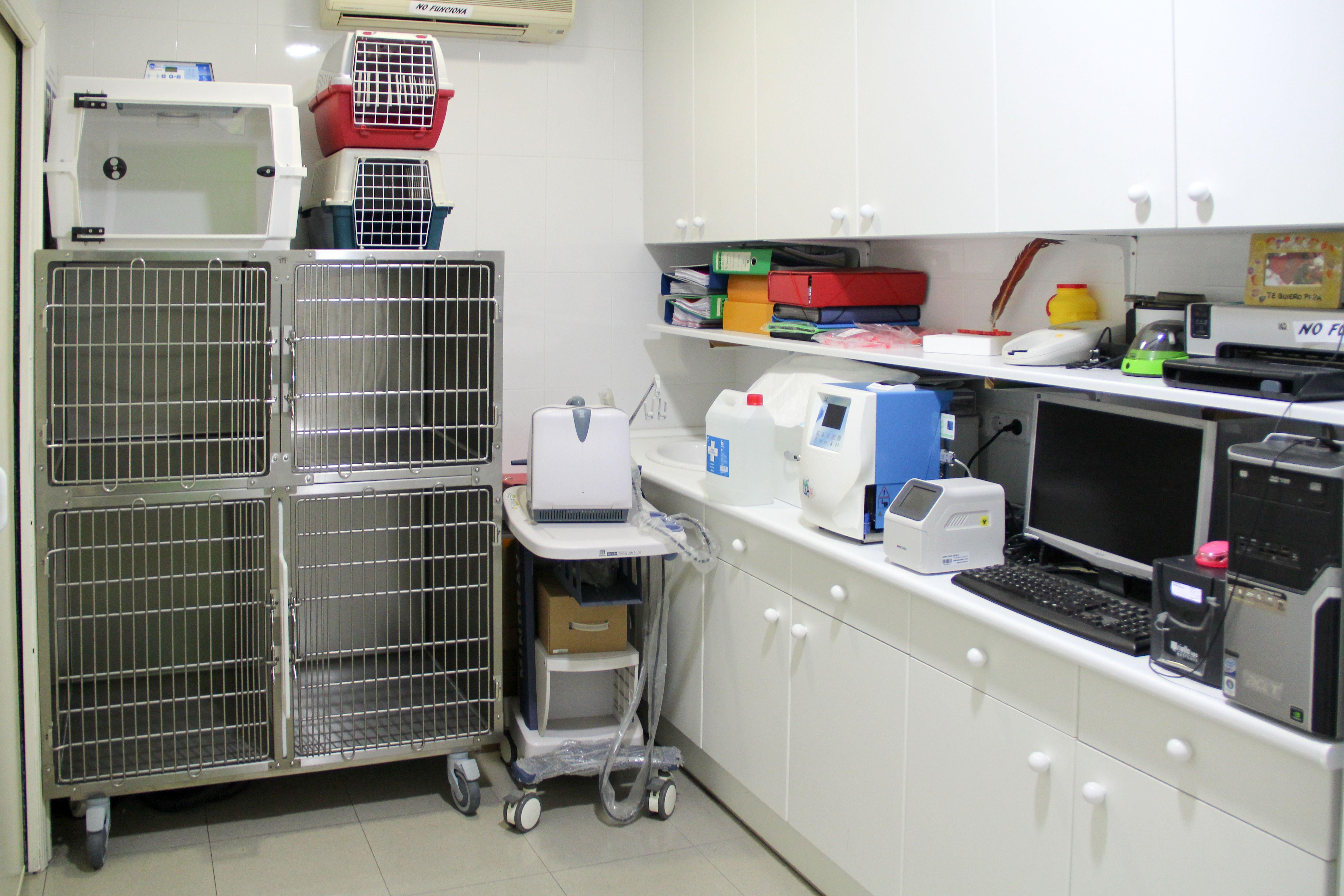 Foto 3 de Veterinarios en Torrejón de Ardoz | Clínica Veterinaria Centro