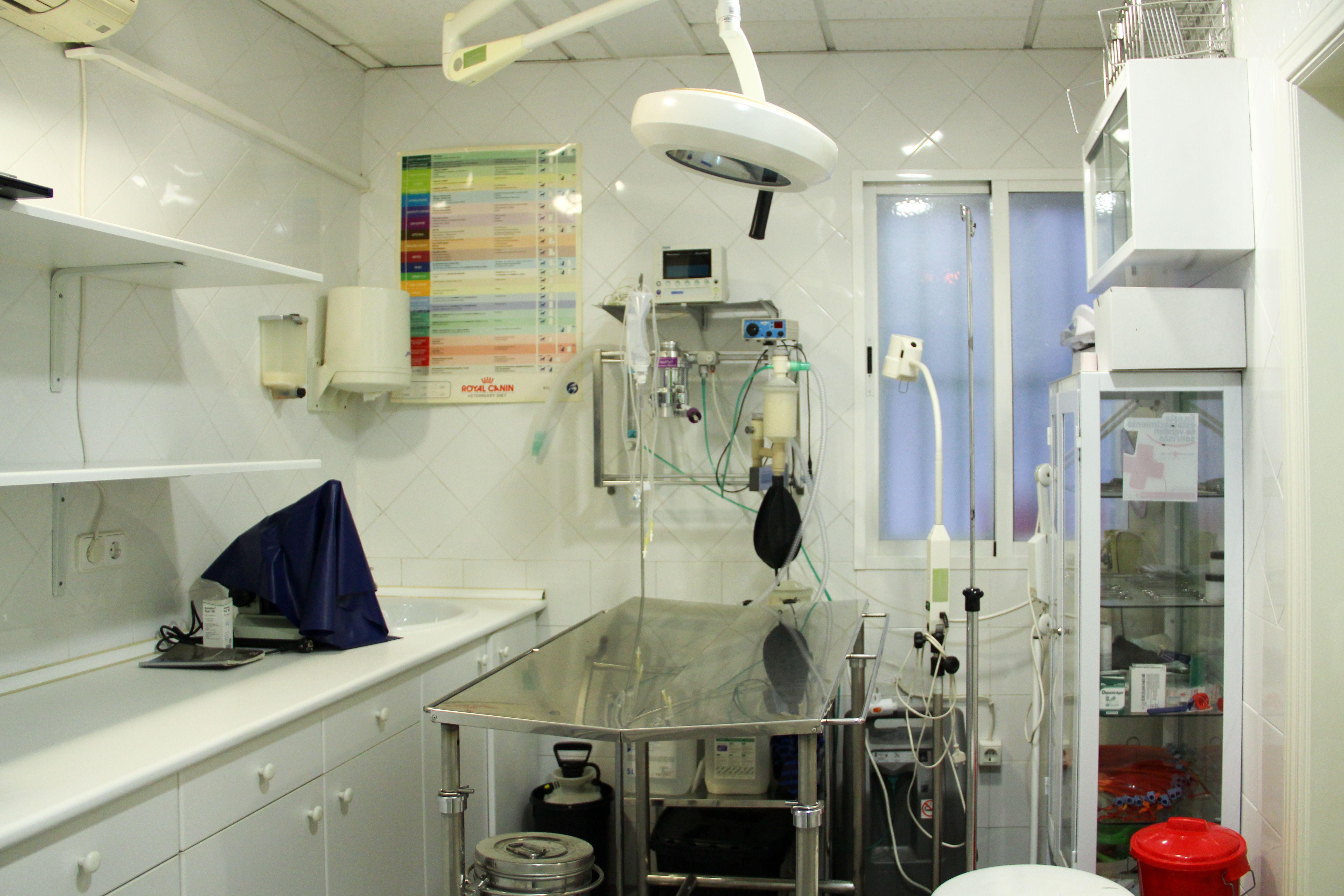 Foto 4 de Veterinarios en Torrejón de Ardoz | Clínica Veterinaria Centro