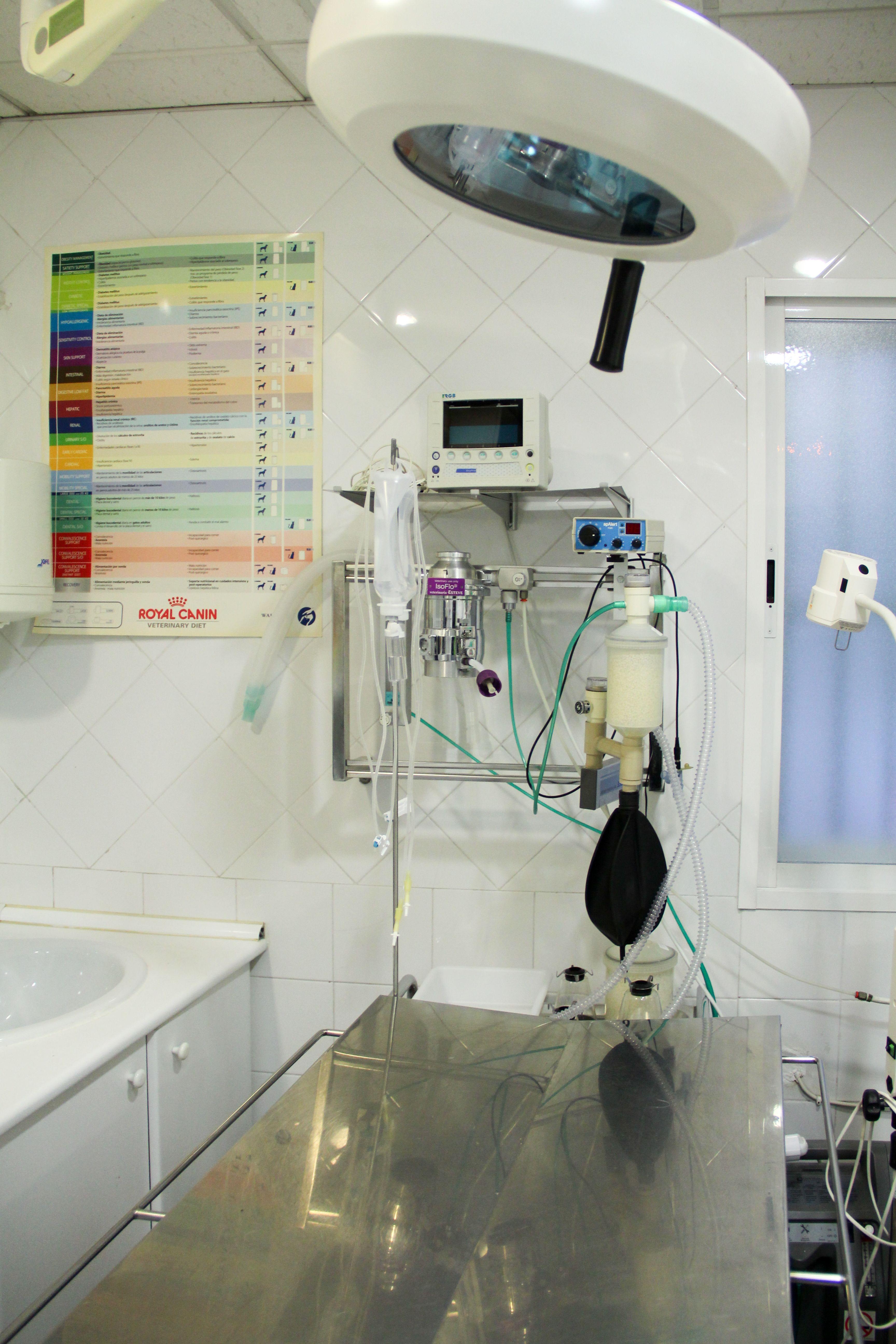Foto 5 de Veterinarios en Torrejón de Ardoz | Clínica Veterinaria Centro