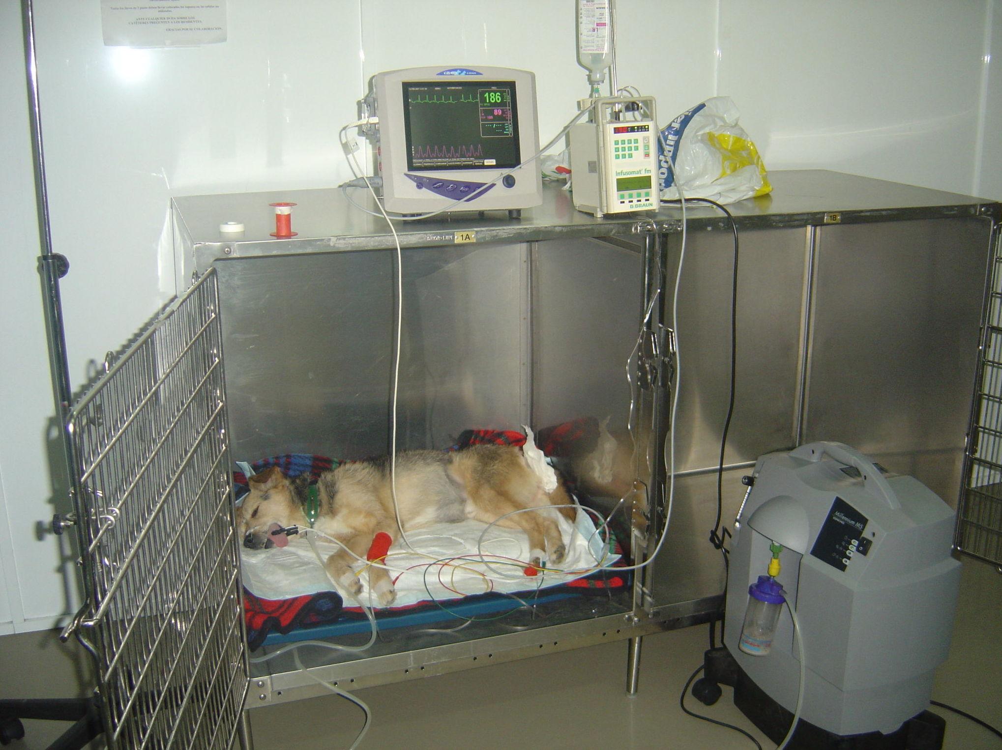 Clínica veterinaria Ferrol