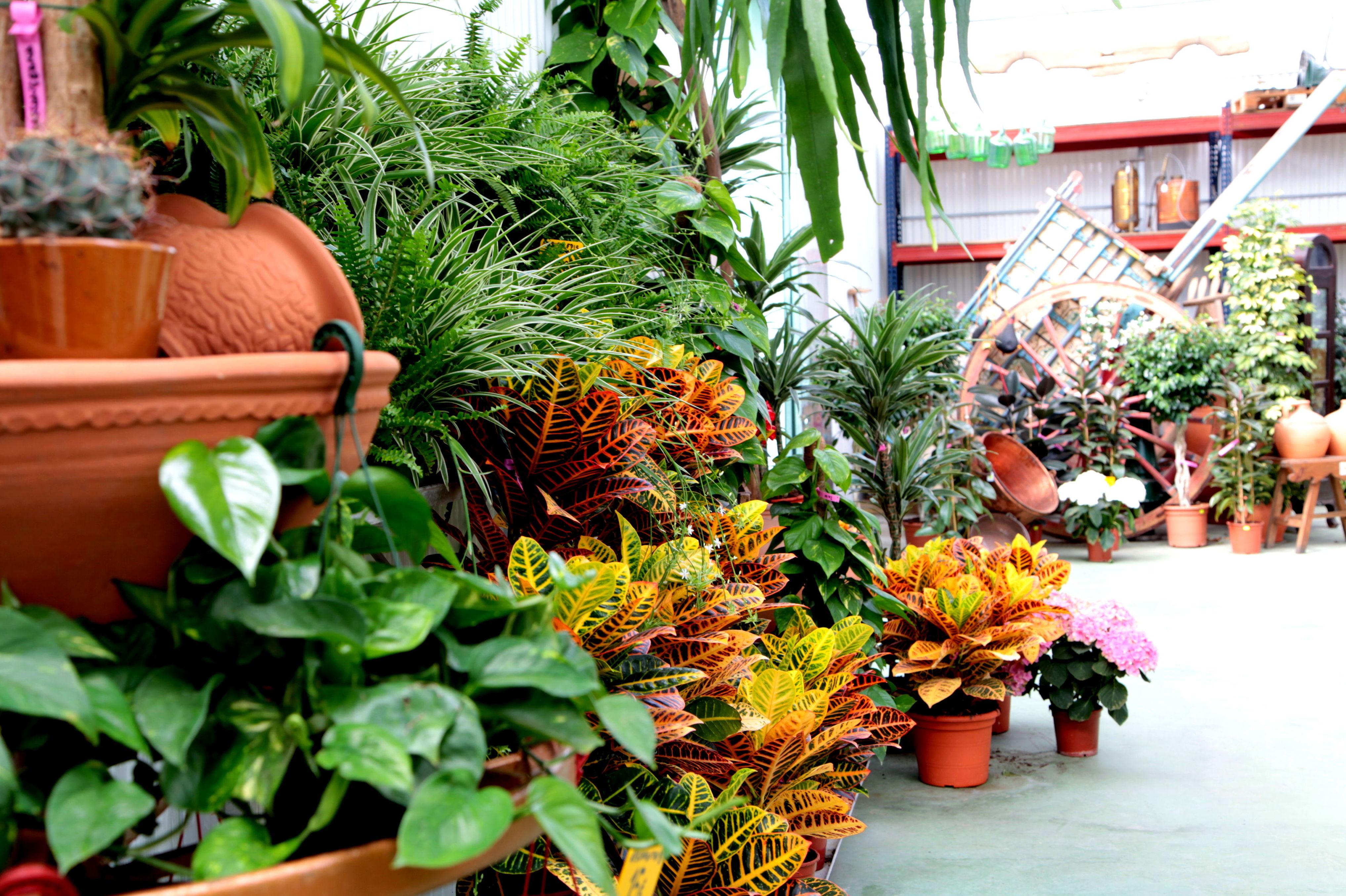 Foto 8 de Material y accesorios de jardinería en Fuente el Saz de Jarama | Mofusa