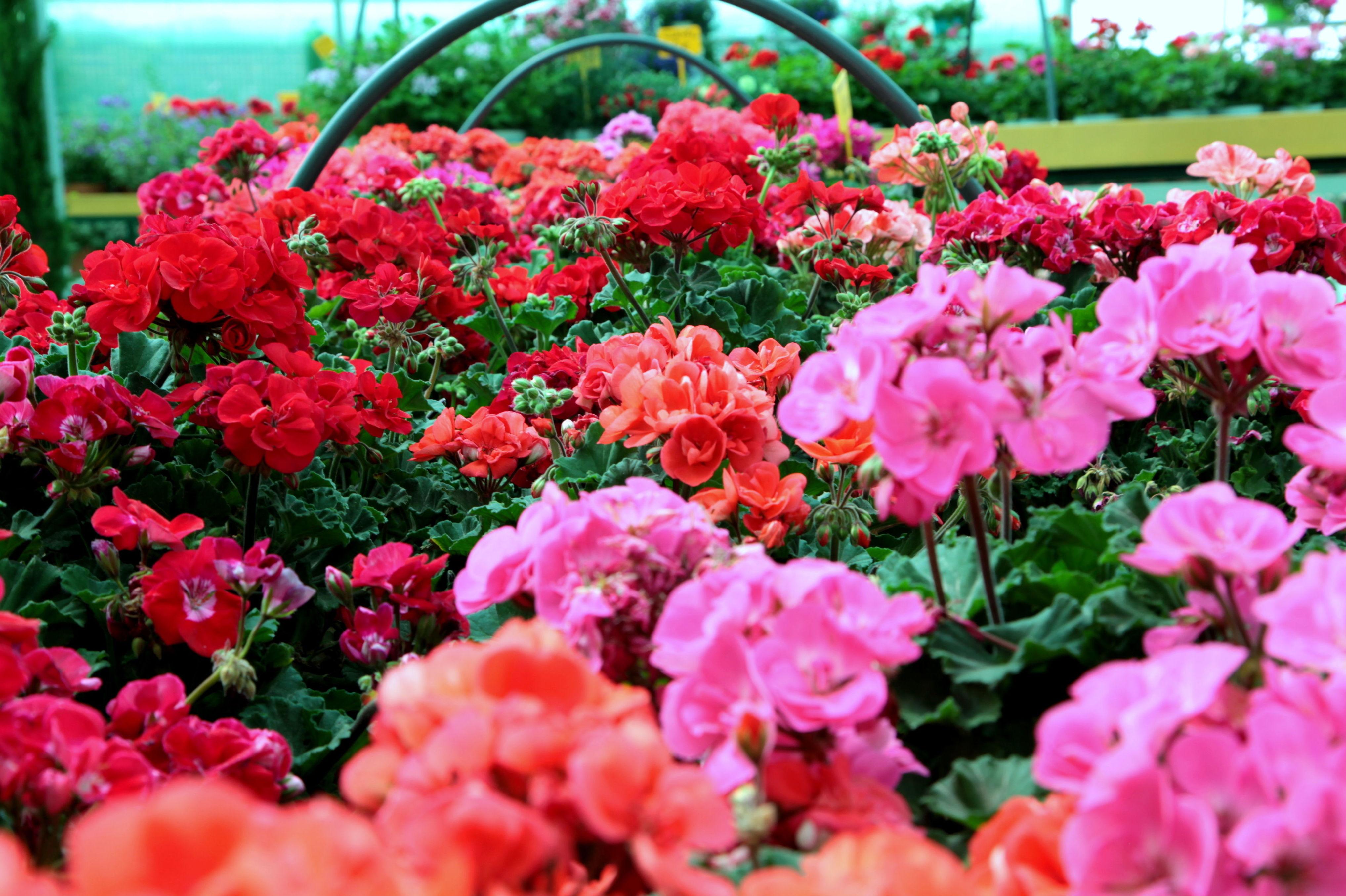 Foto 11 de Material y accesorios de jardinería en Fuente el Saz de Jarama | Mofusa