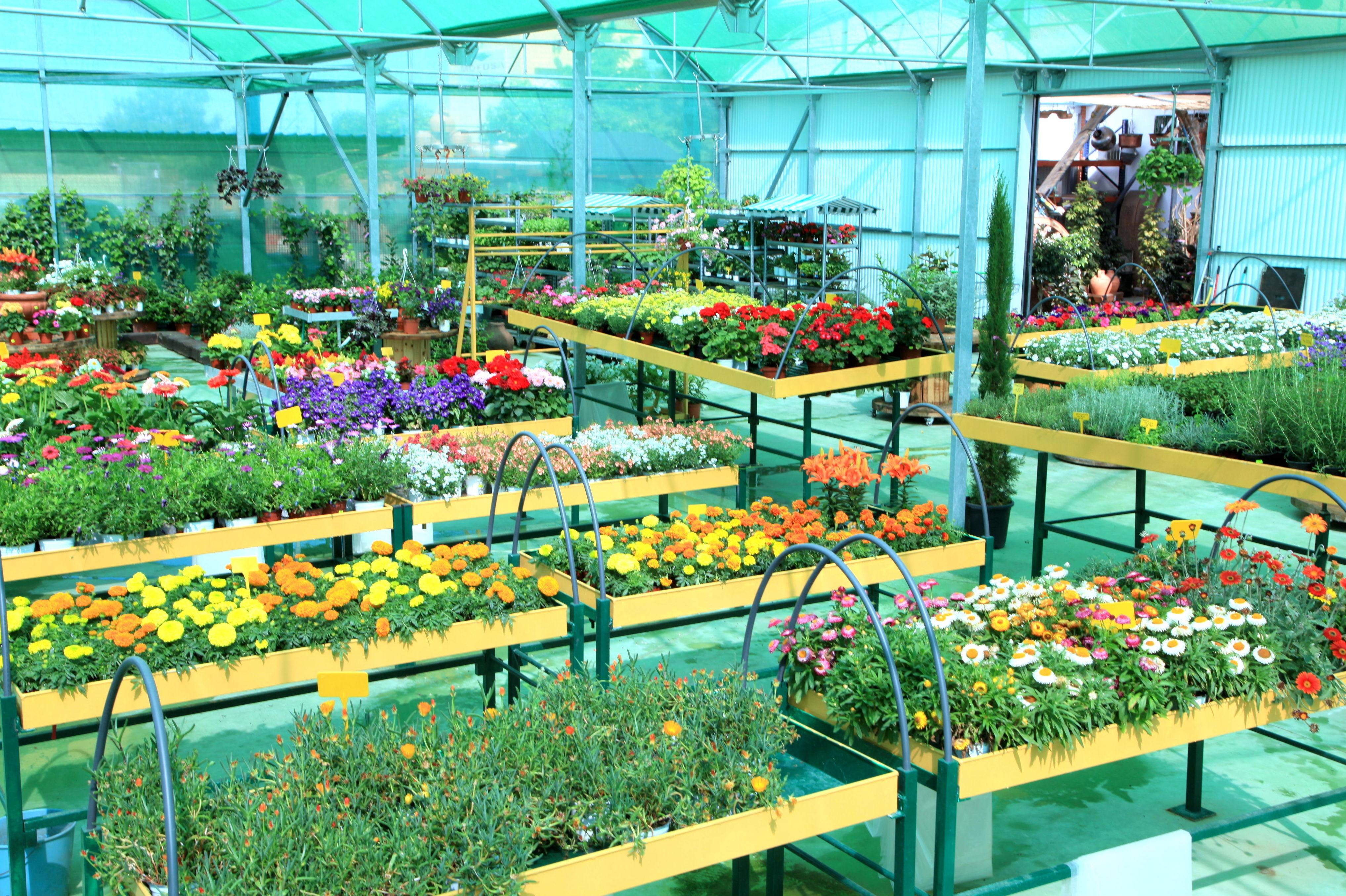 Plantas de exterior Madrid | Mofusa