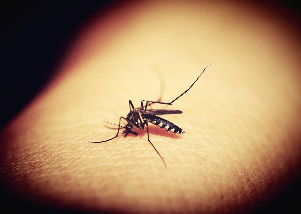 Mosquitos: Servicios de Control de plagas Equiluz