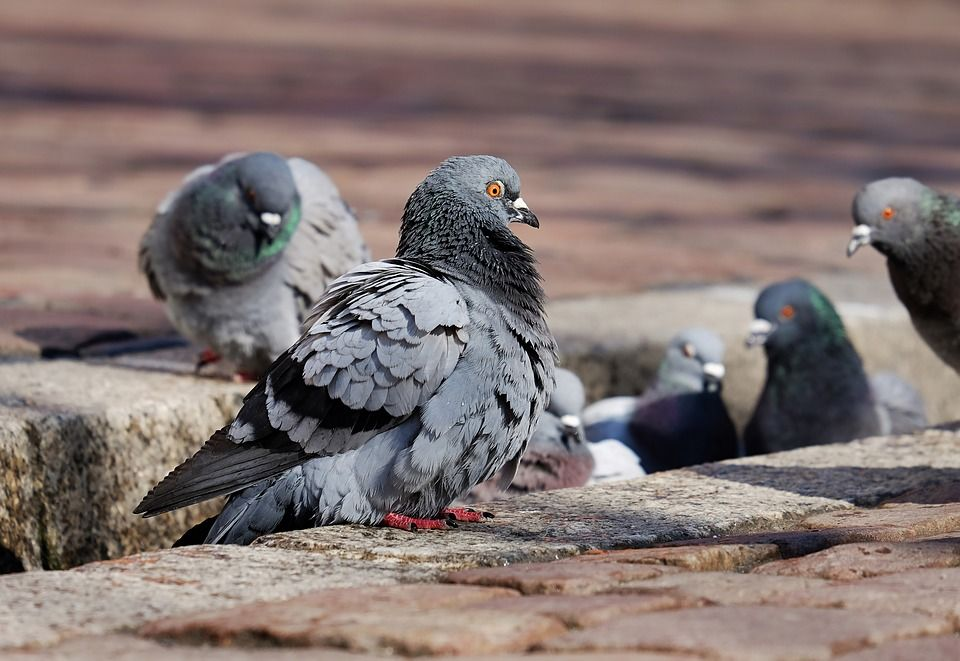 Aves: Servicios de Control de plagas Equiluz