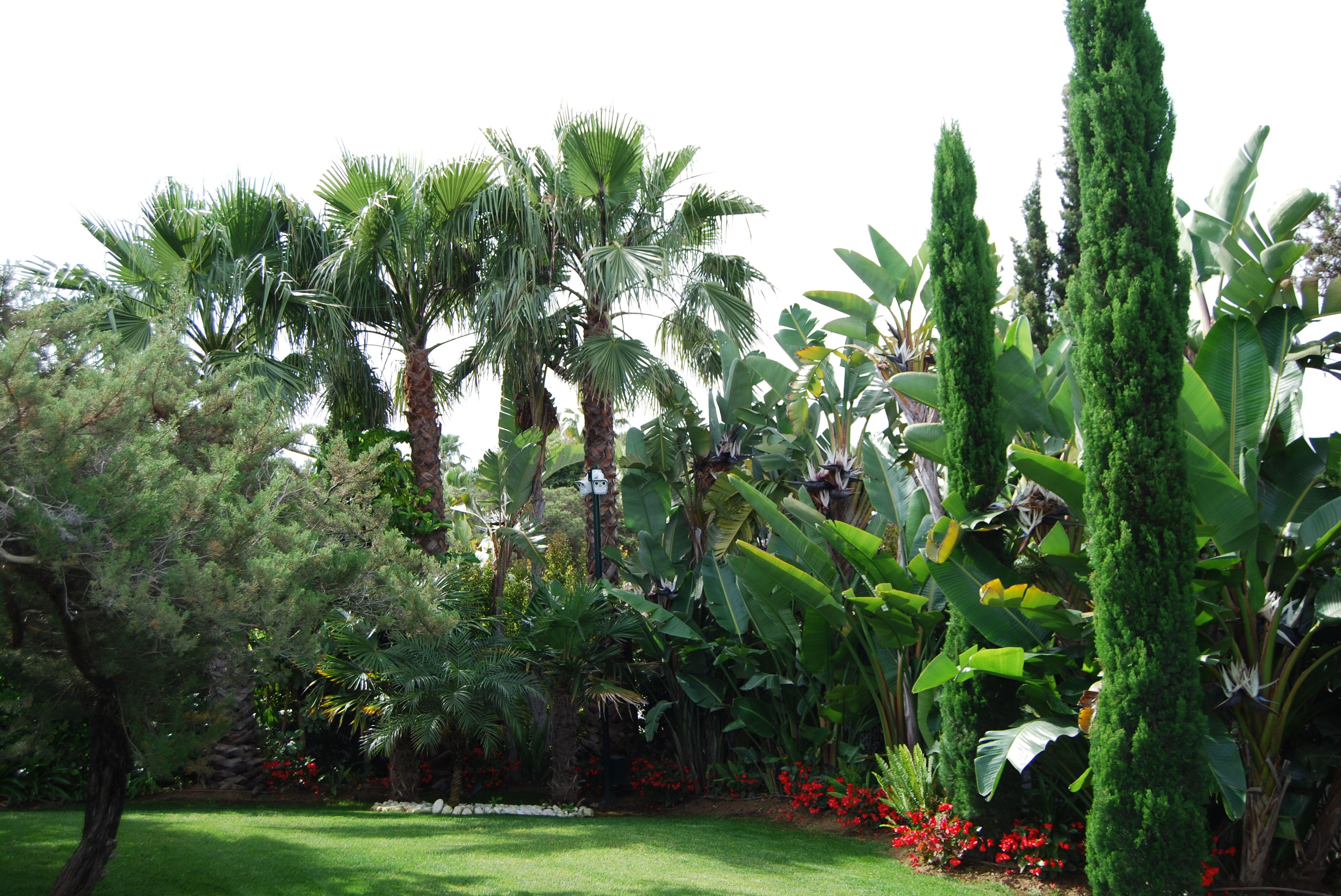 Foto 6 de Diseño y mantenimiento de jardines en San Pedro de Alcántara   Fantastic Gardens